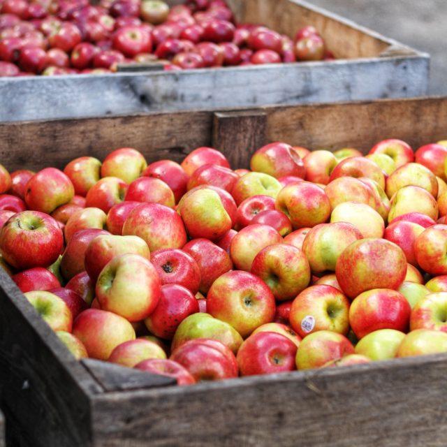 abundance-apples-crate-1468000