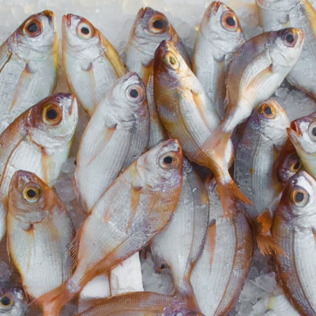 catch-fish-fish-market-229789